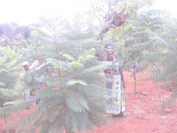 kengap horticulture  nairobi  kenya