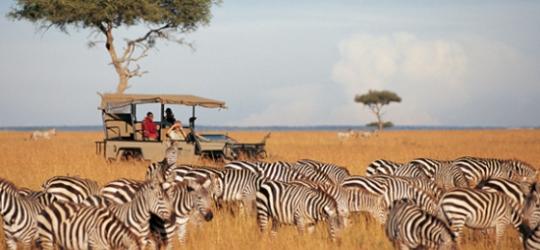 cheetah revolution safaris  nairobi  kenya