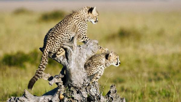 Bush Baby Safaris (Nairobi, Kenya) - Phone, Address